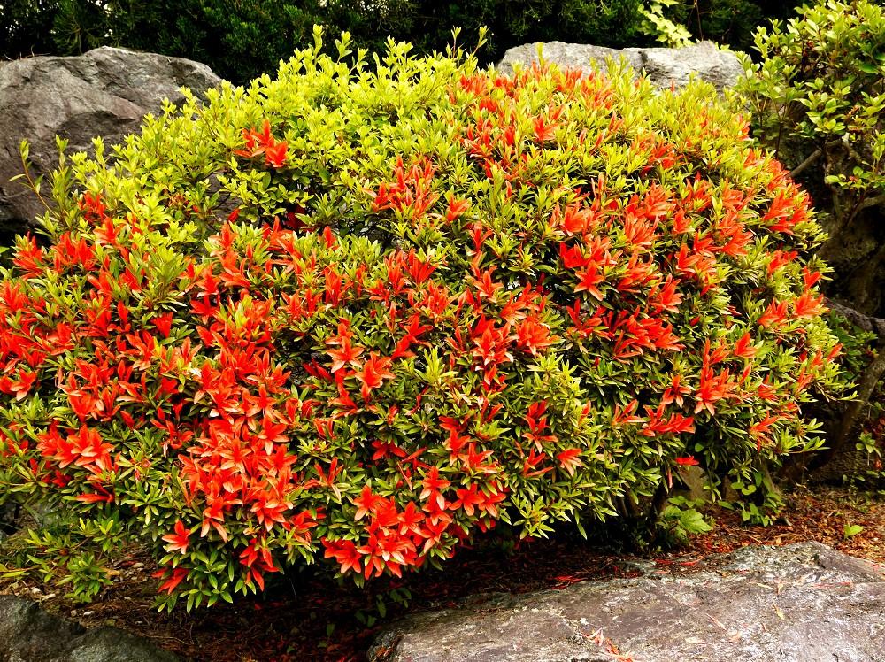 和歌山県植物公園緑花センター _b0093754_21402238.jpg