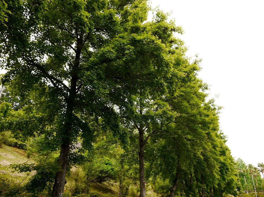 和歌山県植物公園緑花センター _b0093754_2140318.jpg