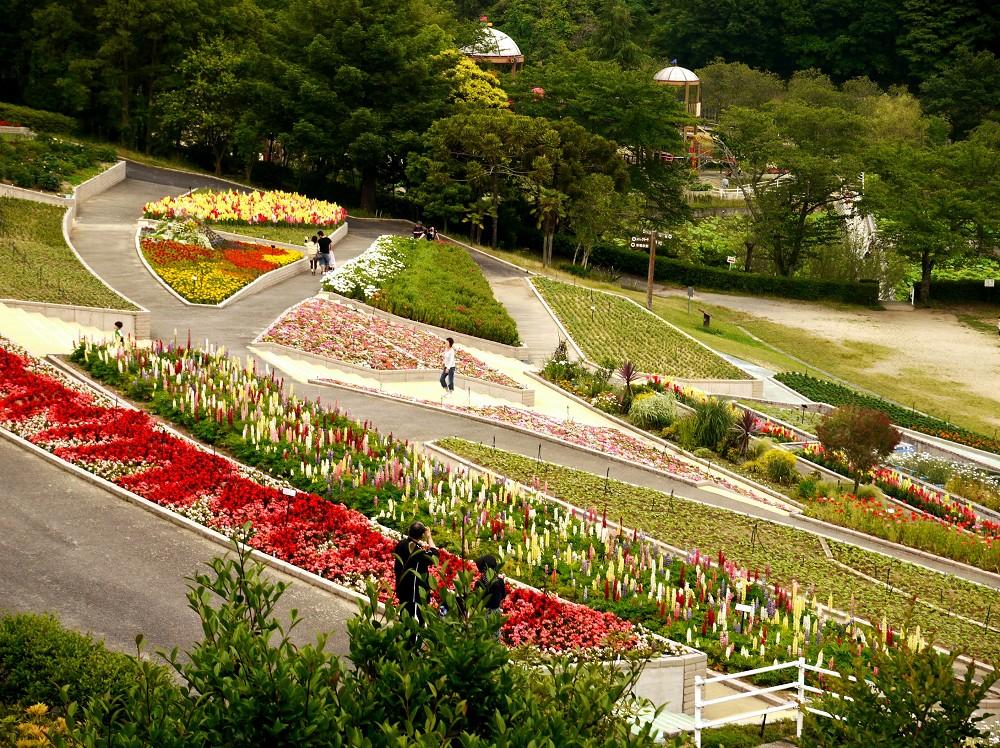 和歌山県植物公園緑花センター _b0093754_21404162.jpg