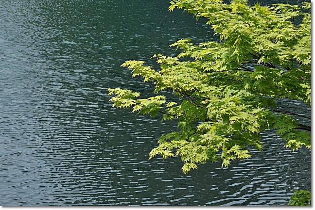 糸魚川市・・・高浪の池_b0053765_1123983.jpg