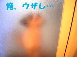 d0140668_9362614.jpg