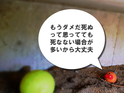 e0112879_00853.jpg