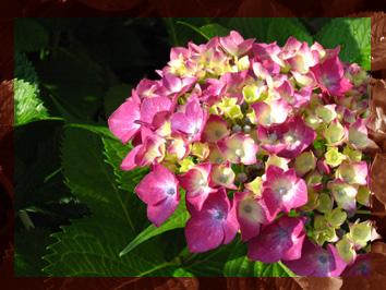 HIROCOカラーは紫陽花カラー_d0154601_16564925.jpg