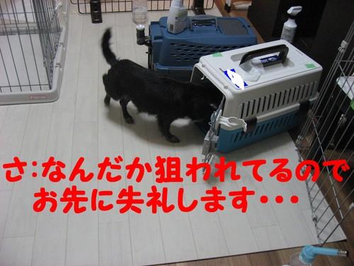 b0210702_2303057.jpg