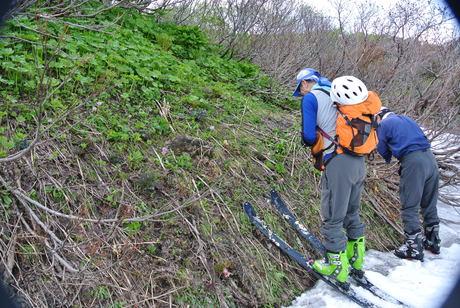 新緑と花もきれいな残雪の鳥海山_c0242406_16121479.jpg