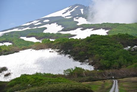 新緑と花もきれいな残雪の鳥海山_c0242406_1664258.jpg