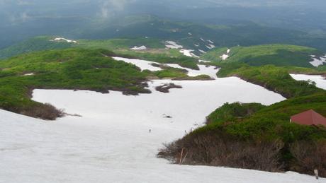 新緑と花もきれいな残雪の鳥海山_c0242406_1672971.jpg
