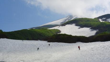 新緑と花もきれいな残雪の鳥海山_c0242406_1685856.jpg