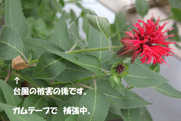 f0186509_1919973.jpg