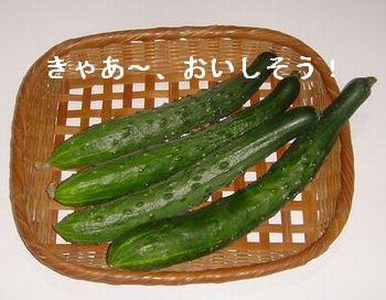I LOVE きゅうり!_e0234016_20292791.jpg