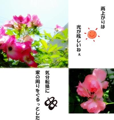e0136420_12465131.jpg