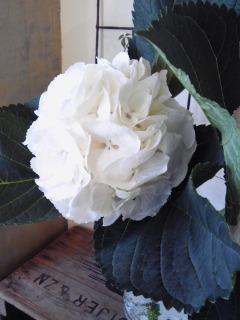大切な日のお花。。。_a0229658_22562177.jpg