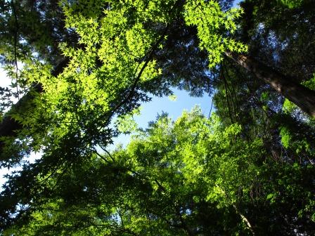 森と水のリゾート~呂久沢の森②_a0243064_23165591.jpg