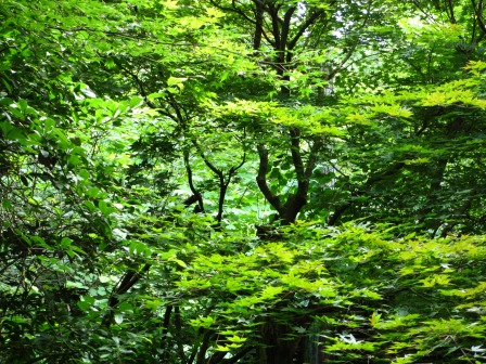 森と水のリゾート~呂久沢の森②_a0243064_2333536.jpg