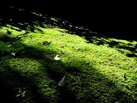 森と水のリゾート~呂久沢の森②_a0243064_23352753.jpg