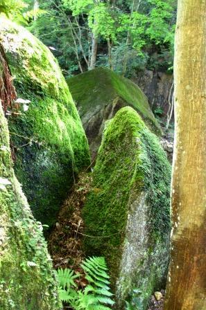 森と水のリゾート~呂久沢の森②_a0243064_23364146.jpg
