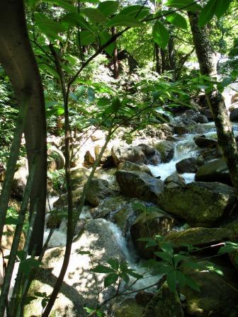 森と水のリゾート~呂久沢の森②_a0243064_2352120.jpg
