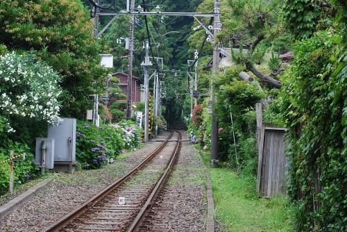 鎌倉のあじさい_d0091671_13201491.jpg