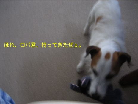 c0179472_657129.jpg