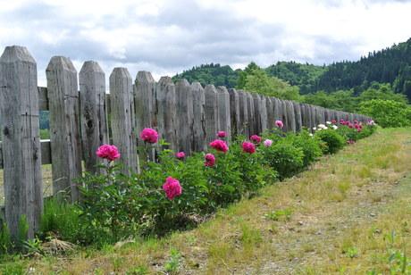 鳥海山麓「真坂」への楽しい鉄道の旅_c0242406_1535989.jpg
