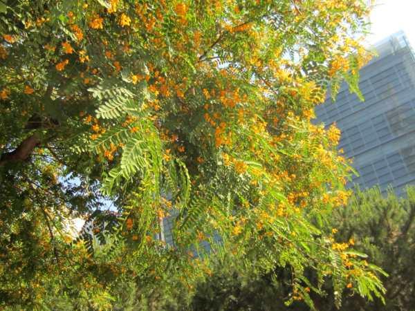黄色い花びら_b0064411_13461088.jpg