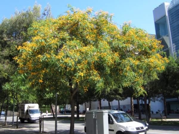 黄色い花びら_b0064411_13464258.jpg