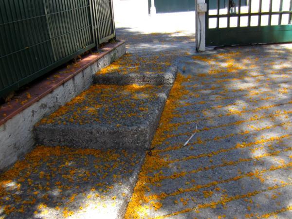 黄色い花びら_b0064411_1354515.jpg
