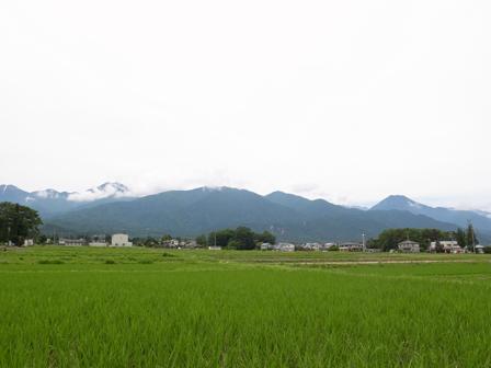 田んぼの緑がきれいな土曜日_a0014840_2257391.jpg