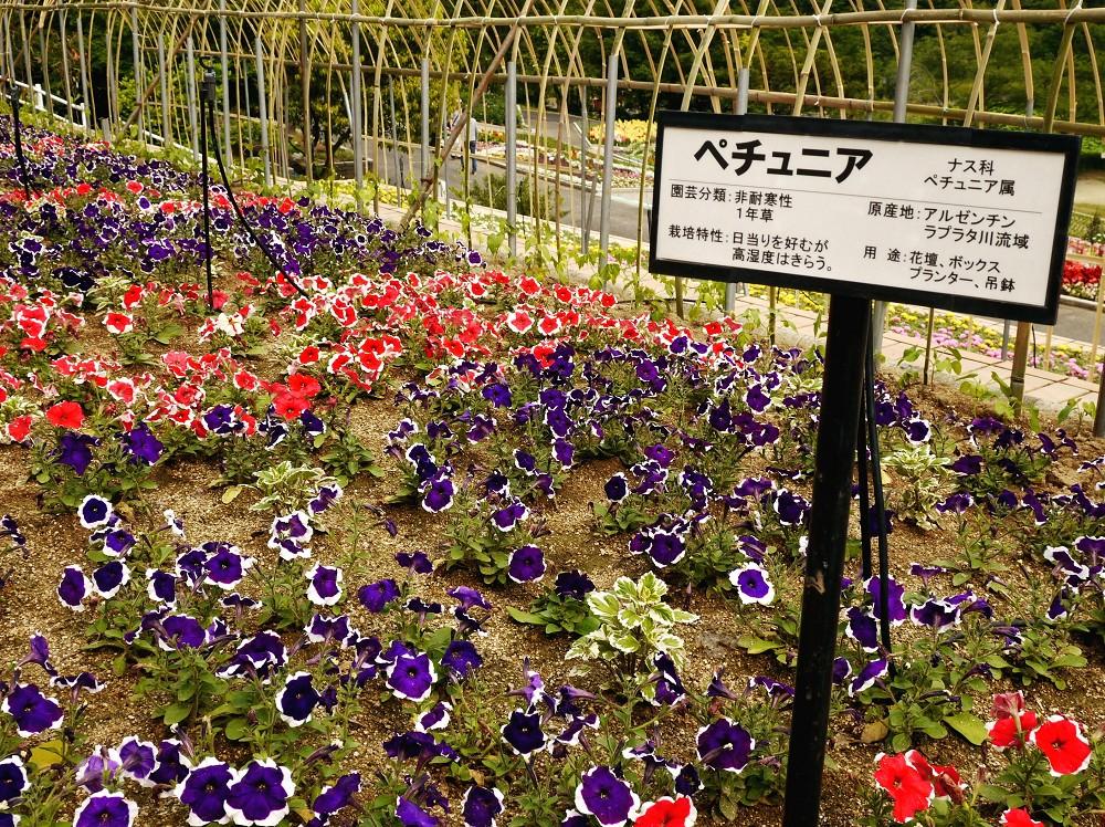 和歌山県植物公園緑花センター _b0093754_22474285.jpg