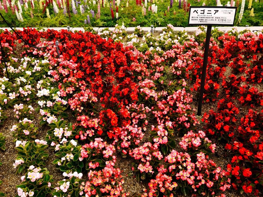 和歌山県植物公園緑花センター _b0093754_22475986.jpg