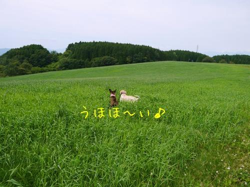 f0177261_21553327.jpg