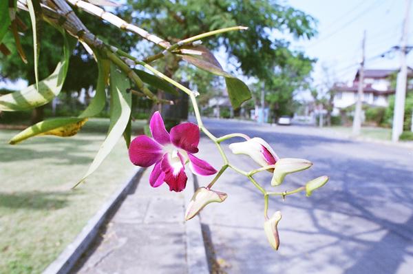 バンコク散歩(18)_b0131470_841187.jpg