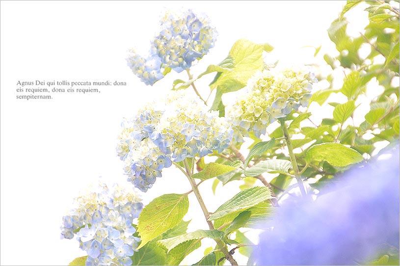 f0198771_005365.jpg