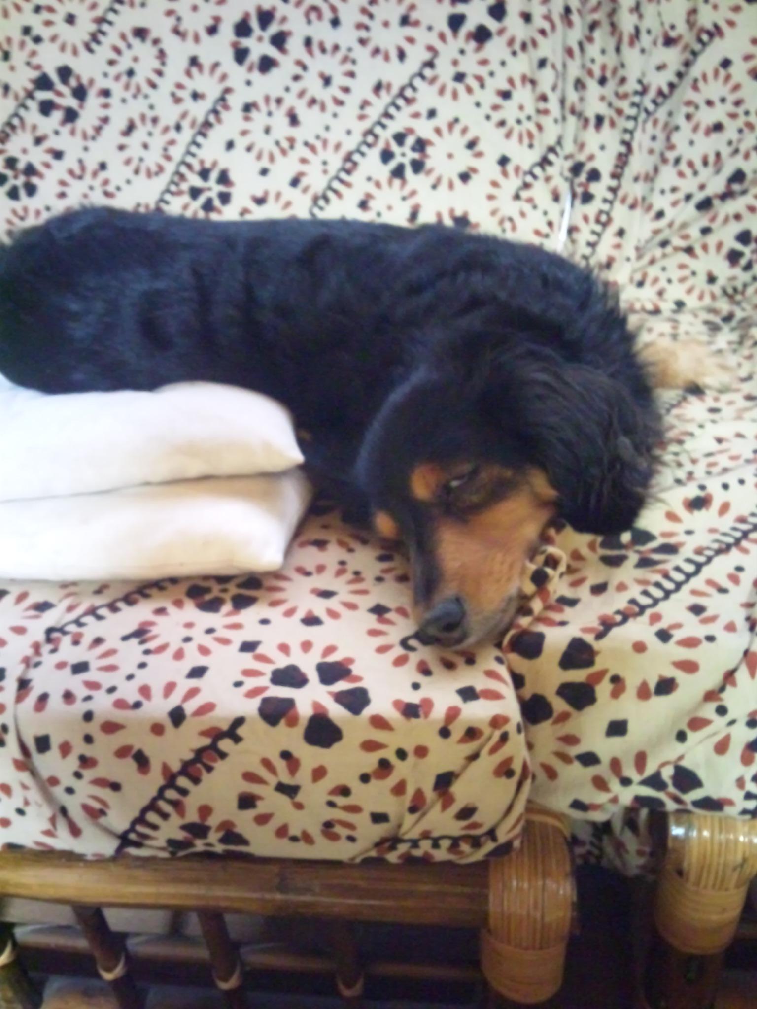 かんばん犬ベリー_b0240973_1885013.jpg