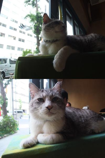 受付猫@花一看_a0180681_2258469.jpg