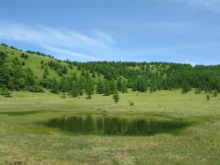 池の平湿原花情報_e0120896_6453259.jpg