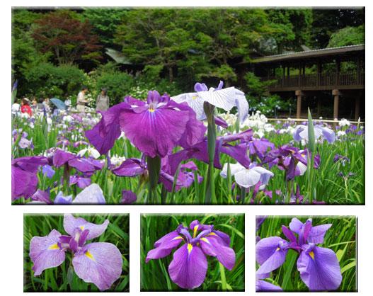 水元公園と本土寺をウォーキング_c0051105_2303044.jpg