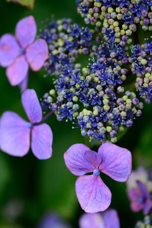 紫陽花と・・・_d0119505_1458358.jpg