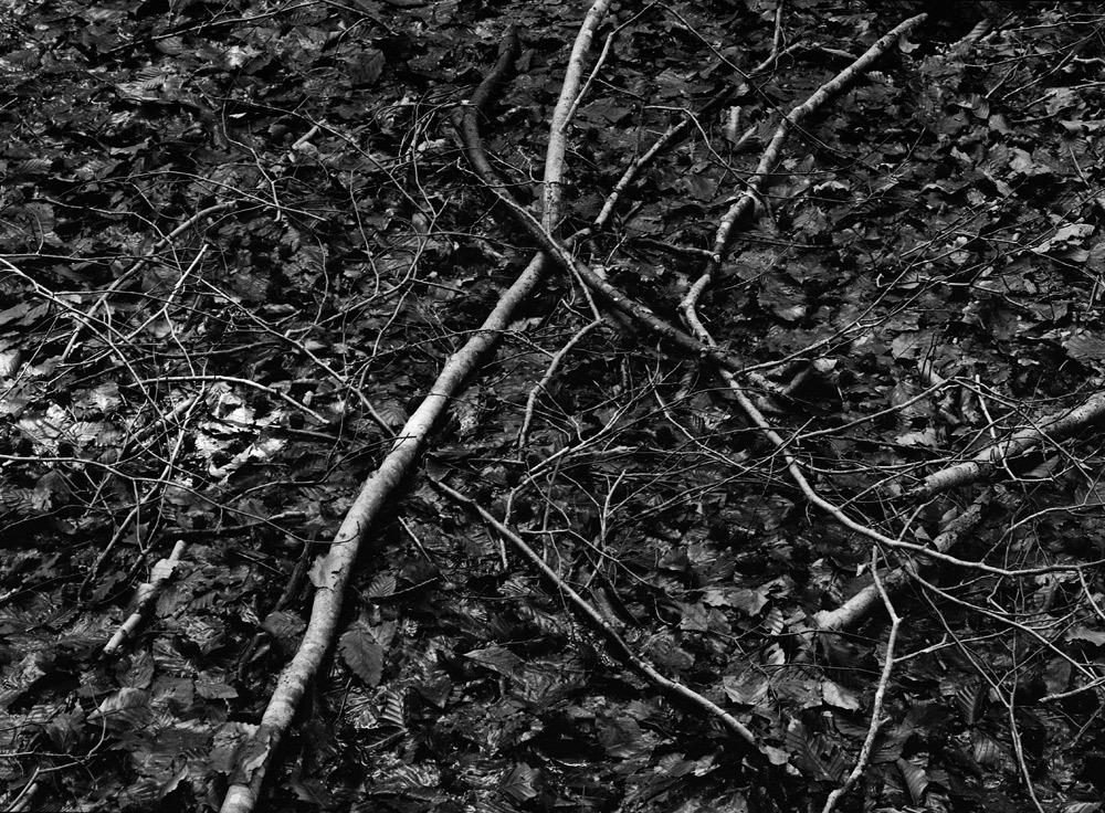 ブナの森へ_c0065410_2143357.jpg