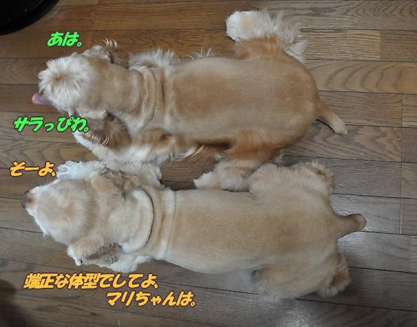 b0067012_11484922.jpg