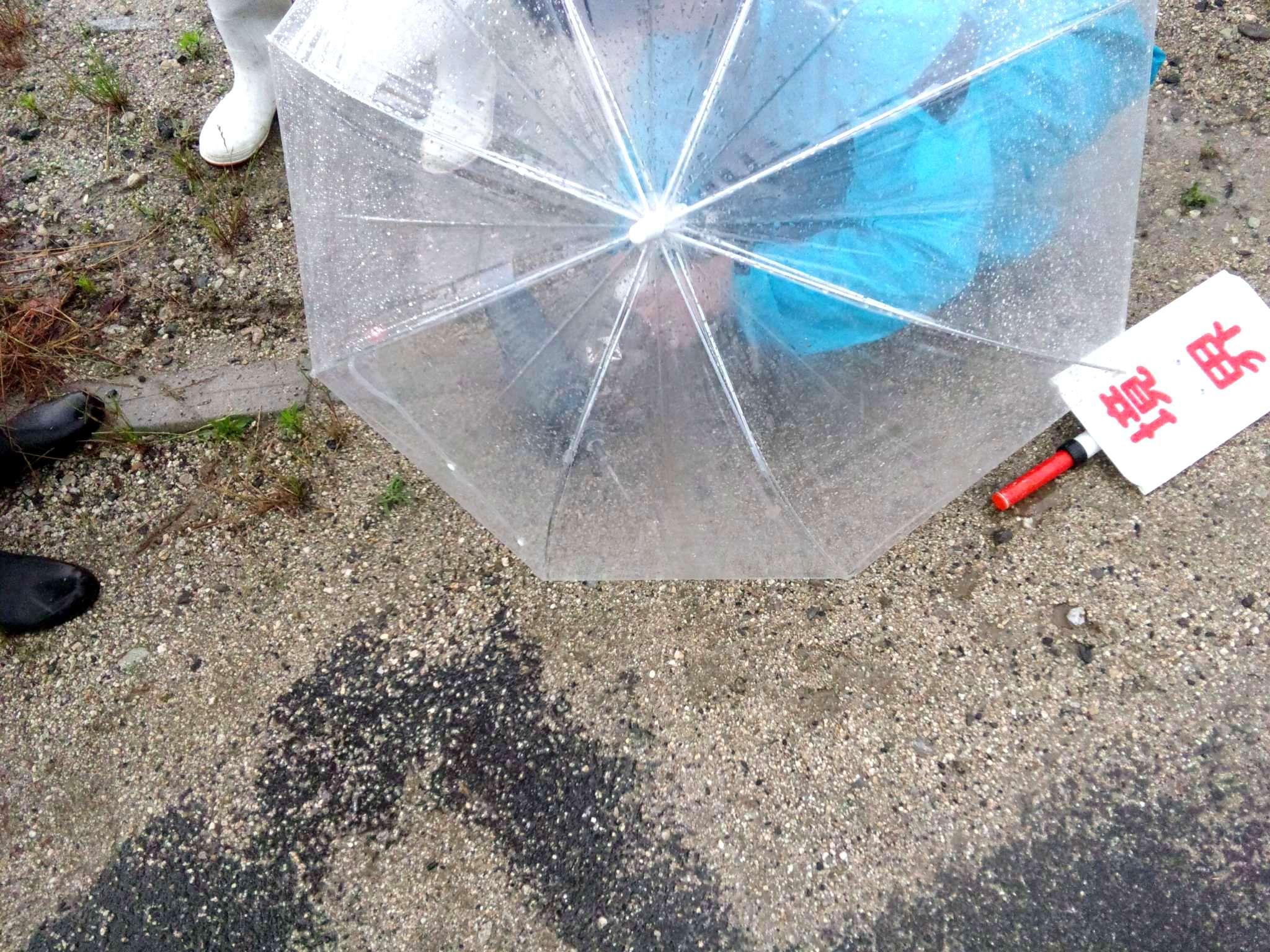 梅雨継続中_f0150413_0362122.jpg
