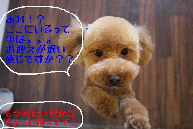 b0130018_26355.jpg