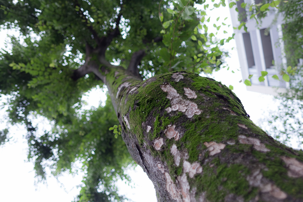 CANON EF28mm F2.8 IS USMを含む28mmレンズ比較_b0213320_1443929.jpg