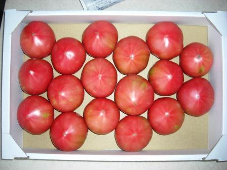 季節のトマト~これも夏ですね、、、~_b0081121_1054563.jpg