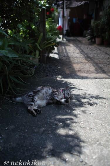 伊勢えびの町で猫を探す_b0138848_5145062.jpg