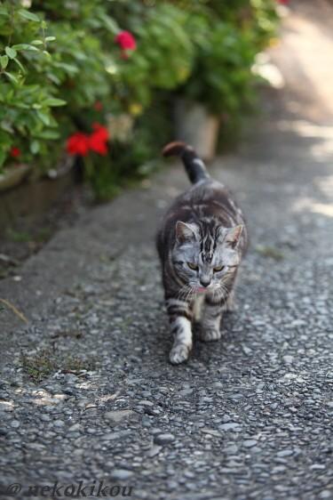 伊勢えびの町で猫を探す_b0138848_5152072.jpg