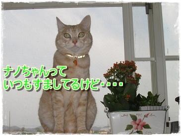 モカの小さな発見&喜び_b0151748_10335066.jpg
