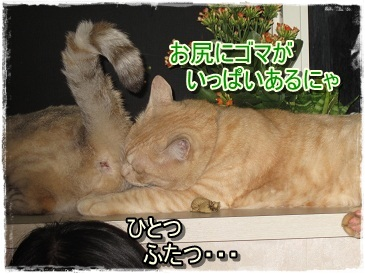 モカの小さな発見&喜び_b0151748_10342993.jpg