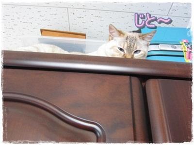 モカの小さな発見&喜び_b0151748_1040832.jpg
