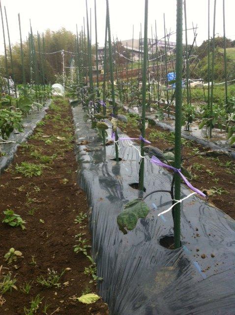 トマトの苗補修_c0222448_12482078.jpg
